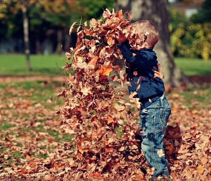 General Safety Tips for Seasonal Yard Work